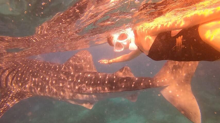 ジンベイザメと泳ぐモモセユキさん